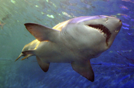 Акула атаковала украинских туристов в Египте и откусила подростку руку