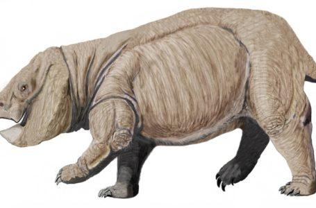 В Китае нашли останки древней рептилии с бивнями